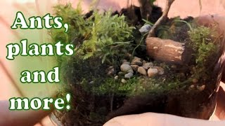 Download Making a terrarium! Self sustaining ecosystem in a jar! Video