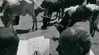Download L'UNESCO et l'éducation : une histoire en images (teaser) Video