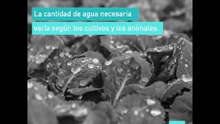 Download Cuando desperdicias alimentos, también desperdicias agua. Video