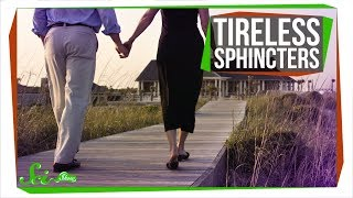 Download Why Doesn't Your Sphincter Get Tired? Video