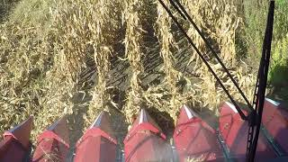 Download Opening a Corn Field Video