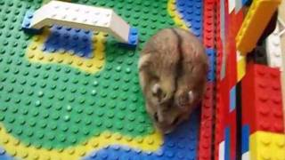 Download my hamsters lego house Video