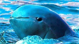 Download 14 Endangered Sea Creatures Video