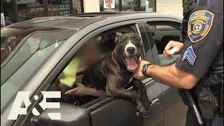 Download Live PD: Illegal Lap Dog (Season 2) | A&E Video