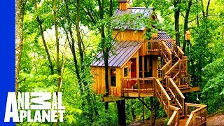 Download Building a Treehouse Inspired By a Bird House Video