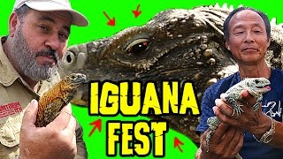Download THE RAREST IGUANAS ON EARTH Video