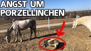Download ANGST UM PORZELLINCHEN ✮ Bangen um mein kleines Pony ... Video