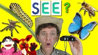Download What Do You See? Song | Bugs and Insects | Learn English Kids Video