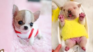 Download Baby Dogs - Cute and Funny Dog Videos Compilation #7 | Aww Animals Video