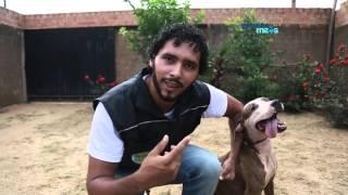 Download Guerreiro e Negão: saiba como melhorar a convivência entre cães Video