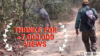 Download Close Encounter with a Tiger in Royal Chitwan National Park Nepal Video