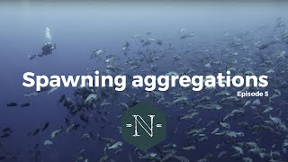 Download Spawning Aggregations - Natural Numbers EP 05 Video