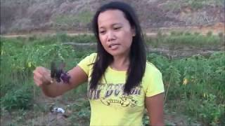 Download VISITING THE FARM AND VEGETABLE THAT CURE DISEASES SIMPLE LIVING IN THE PHILIPPINES Video