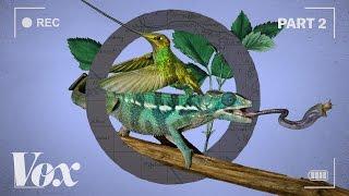Download How wildlife films warp time Video