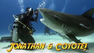 Download Tiger Sharks with Coyote Peterson!   JONATHAN BIRD'S BLUE WORLD Video
