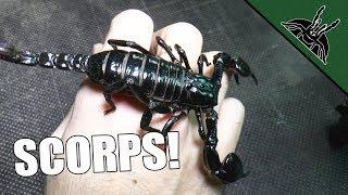 Download ALL OF MY SCORPIONS! Video
