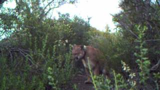 Download Best of 2011 Trail Camera Footage Video