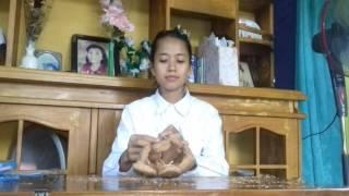 Download Mengolah Serabut kelapa Menjadi Pot Bunga Video