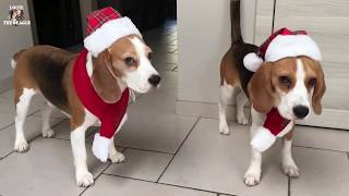 Download The Best Present For A Dog On Christmas : 40 brand new toys! Video