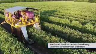 Download Oxbo Raspberry & Blueberry Harvesters Video