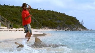 Download Sharks Swim on to Beach to Capture Prey Video