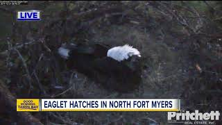Download One of two baby eagles have hatched in Southwest Florida, Eagle Cam watch continues Video