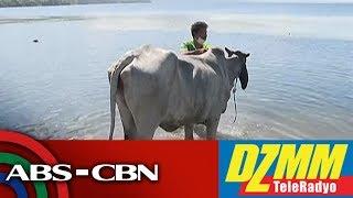 Download PETA may agam-agam sa kapalaran ng mga nasagip na kabayo sa Taal Volcano island | DZMM Video