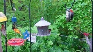 Download Spring Birds' Feeding Frenzy Video
