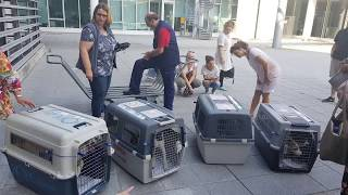 Download Ankunft unserer Hunde am Flughafen München am 19.08.2018 Video