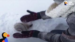 Download Kids Rescue Frozen Squirrel | The Dodo Video
