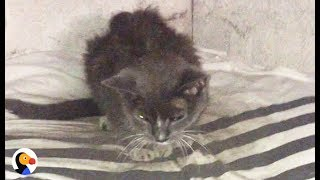 Download Cat Abandoned in Basement for 20 Years Is FINALLY Loved | The Dodo Video