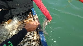 Download Lambo,, Traditional Fishing in Philippines...Catch and Cook. Video