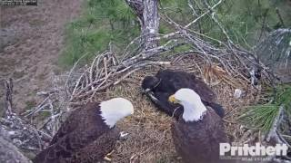 Download 2017/02/21 11h15m SWFL M15 brought a little animal Video