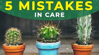 Download 5 COMMON MISTAKES IN CACTUS CARE Video