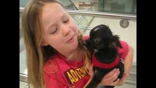 Download Little girl puppy surprise Video