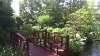 Download 5 Minute Deep Breathing Exercise   City of Hope Video