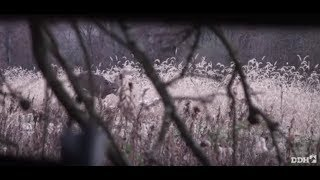 Download Keys to Proper Doe Management | Deer & Deer Hunting TV Video