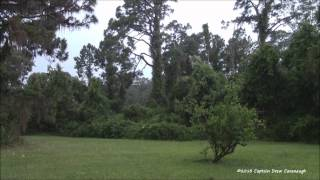 Download Central Florida Lightning Thunderstorm May 2013 HD Video