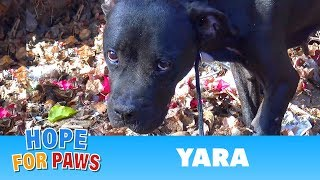 Download Can you see the pain in her eyes? I admit - I was scared on this rescue. Video