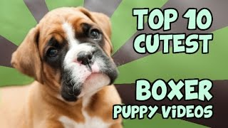 Download TOP 10 CUTEST BOXER PUPPY VIDEOS OF ALL TIME Video