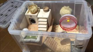 Download 【DIY】ハムスターのケージを高級住宅風に自作してみた! Video