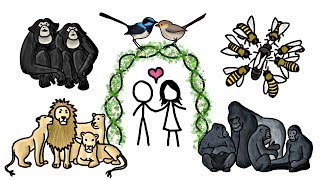 Download Are any Animals Truly Monogamous? Video