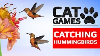 Download CAT GAMES - CATCHING HUMMINGBIRDS (ENTERTAINMENT VIDEOS FOR CATS TO WATCH) Video
