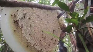 Download Honey Harvest 16 February 2016 Video