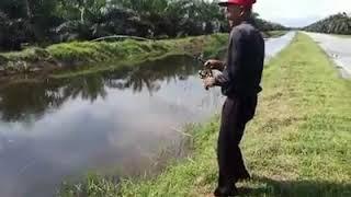 Download Tu dia rod patah tiga ikan aneh 50kg Video