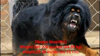 Download Die besten bodyguard hunde Video