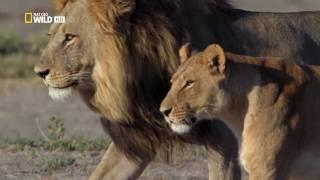 Download Savage Kingdom - Sneak Peek Video