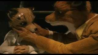 Download Wes Anderson's Most Beautiful Moments Video