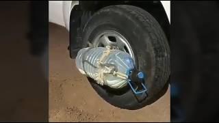 Download اختراع سعودي لم يفكر به اليابانيون😂/تجميع مقاطع انستقرام Video