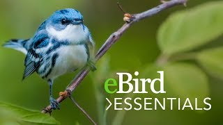 Download Learn eBird Essentials - Bird Academy Video